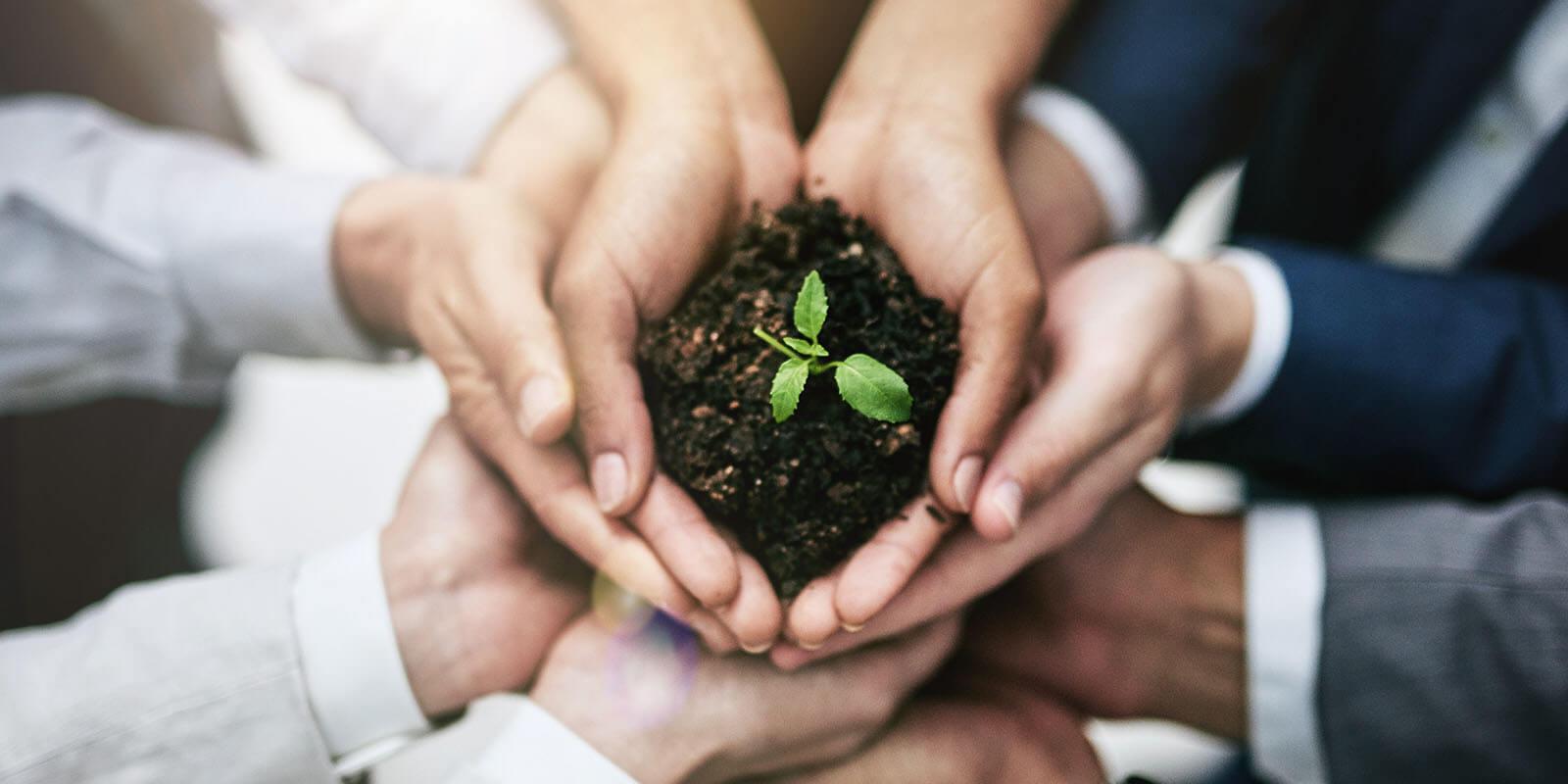 Mehrere Hände halten Erde, in der eine Pflanze wächst
